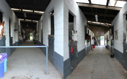 Bottom yard, DIY livery stables